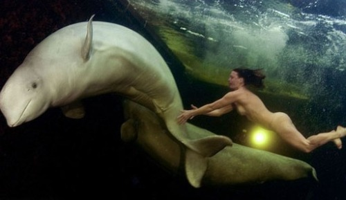 Naked Beluga Swim